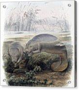 Manatees, Vulnerble Species Acrylic Print