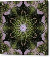 Mandala Sea Sponge Acrylic Print