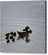 Mandarin Duck And Babes 20130508_227 Acrylic Print
