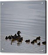 Mandarin Duck And Babes 20130508_230 Acrylic Print