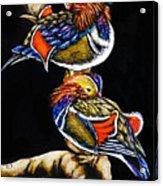Mandarin Ducks - Sa106 Acrylic Print
