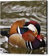 Mandrin Duck Posing Acrylic Print