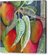 Mango One Acrylic Print