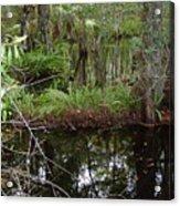 Mangrove     Wild Acrylic Print