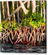Mangrove At Gumbo Limbo Acrylic Print