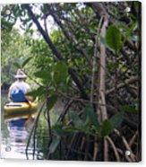 Mangrove Kayaker Acrylic Print by Steven Scott