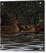 Mangrove Mallards Acrylic Print