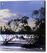 Mangrove Silhouettes Acrylic Print