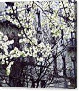 Manhattan Spring Acrylic Print