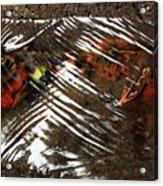 Manoa's Fallen Acrylic Print