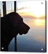 Mans Best Friend Sunset 3 411 Acrylic Print