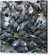 Many Doves At Piazza San Marco Venice Acrylic Print