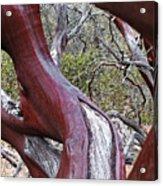 Manzanita Window Acrylic Print