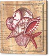 Map And Shells Acrylic Print