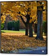 Maple And Arborvitae Acrylic Print