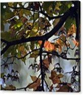 Maple Color Acrylic Print