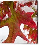 Maple Leaf And Snow 7467 Acrylic Print