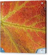 Maple Leaf On Water Acrylic Print