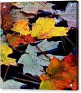 Maple Leaves-0012 Acrylic Print