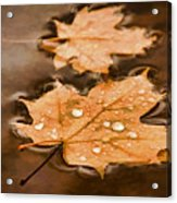 Maple Leaves And Drops Pnt Acrylic Print