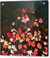Maple Leaves On The Water  Acrylic Print