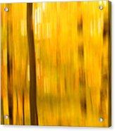Maple Magic Acrylic Print
