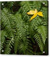 Maple On Fern Acrylic Print