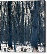 Maple Sirup Infrared N01 Acrylic Print