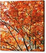 Maple Tree Foliage Acrylic Print