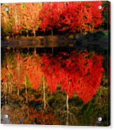 Maple Tree Mirror Acrylic Print