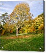 Maple Tree On The Slope. Acrylic Print