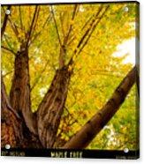 Maple Tree Poster Acrylic Print