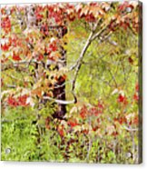 Maple Tree W C  Acrylic Print