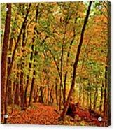Maple Woods Trail 2 Acrylic Print