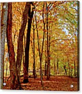 Maple Woods Trail 3 Acrylic Print