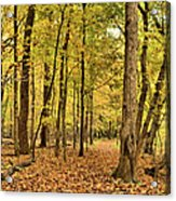 Maple Woods Trail Acrylic Print