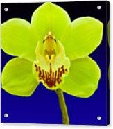 Mapplethorpe Flower Acrylic Print