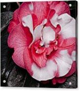 Marble Camellia Acrylic Print