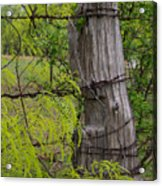 Marble Falls Texas Old Fence Post In Spring Acrylic Print