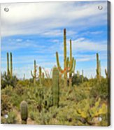 March Flowers And Cactus Acrylic Print