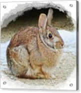 March Rabbit With Vignette Acrylic Print