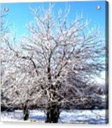 March Tree Acrylic Print
