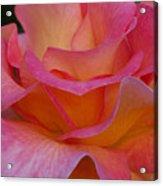 Mardi Gras Rose Macro Acrylic Print