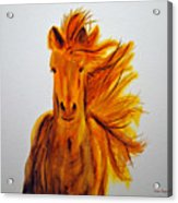 Mare In Motion Acrylic Print
