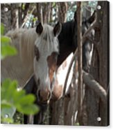 Mares In Trees Acrylic Print