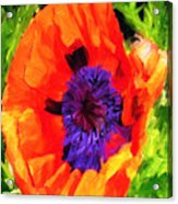 Margo's Poppy Acrylic Print
