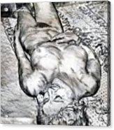 Nude Maria On Animal Sheets Acrylic Print