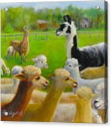 Mariah Guards The Herd Acrylic Print
