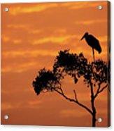 Maribou Stork On Tree With Orange Sunrise Sky Acrylic Print