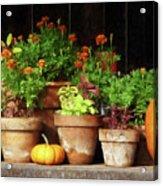 Marigolds And Pumpkins Acrylic Print